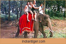 Elephant Safari, Adventure Tours India