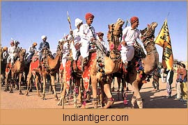 Camel Safari, Rajasthan Tour Packages