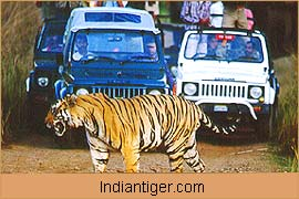 Tiger Safari Tour